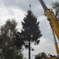 bomen verzorgen Gelderland