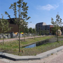 Bomen planten Dordrecht