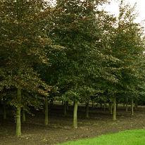 bomen-verzorgen