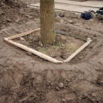 Verankering van bomen