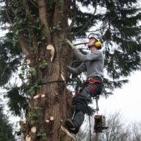 bomen verzorgen Utrecht