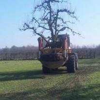 bomen verplanten in Utrecht
