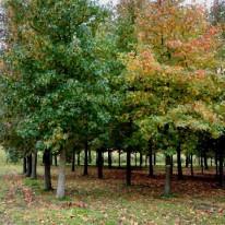 verkoop bomen