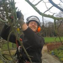 boom onderhoud - Achterhoek