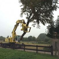 Bomen kappen met boomklem